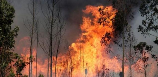 आगलागीबाट एक घर, छ गोठ जलेर नष्ट
