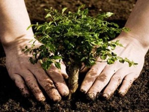 कटानसंगै विरुवा रोपेर वन व्यवस्थापन