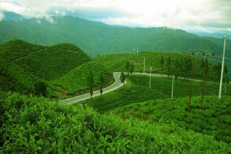 चक्रपथमा तीन हजार बिरुवा रोपेर काठमाण्डौ हरियाली बनाउने बन मन्त्रालयको तयारी