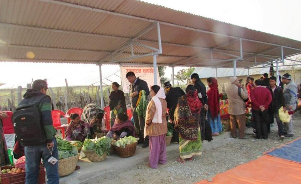 बेलौरीका दुई स्थानमा तरकारी संकलन केन्द्र स्थापना