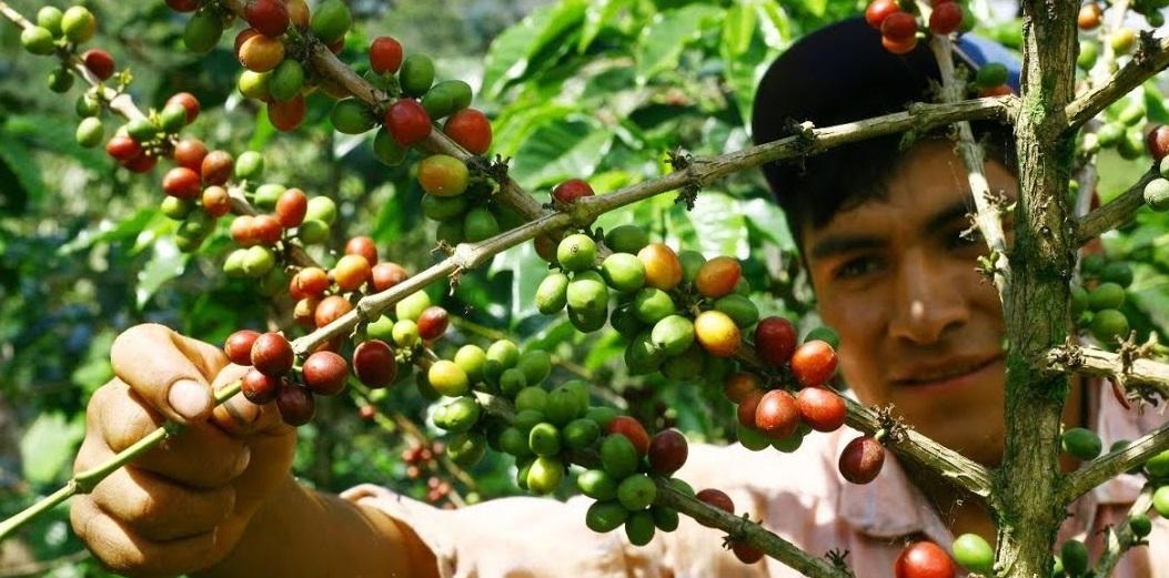 कफी खेतीको विकासका लागि समूह गठन
