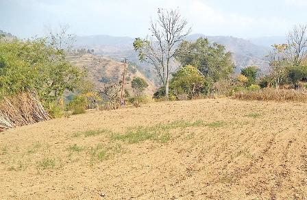 बसाइँसराइका कारण खेतीयोग्य जमिनको बिजोग