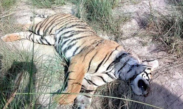 तटिय क्षेत्रको संरक्षणमा ध्यान नपुग्दा वन्यजन्तु जोखिममा