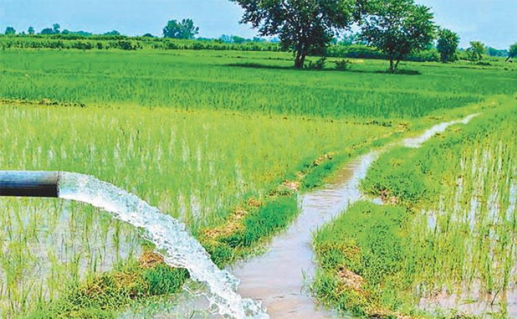 पाँच वर्षभित्र खेतीयोग्य जमीनमा बाह्रै महिना सिँचाइ सुविधा