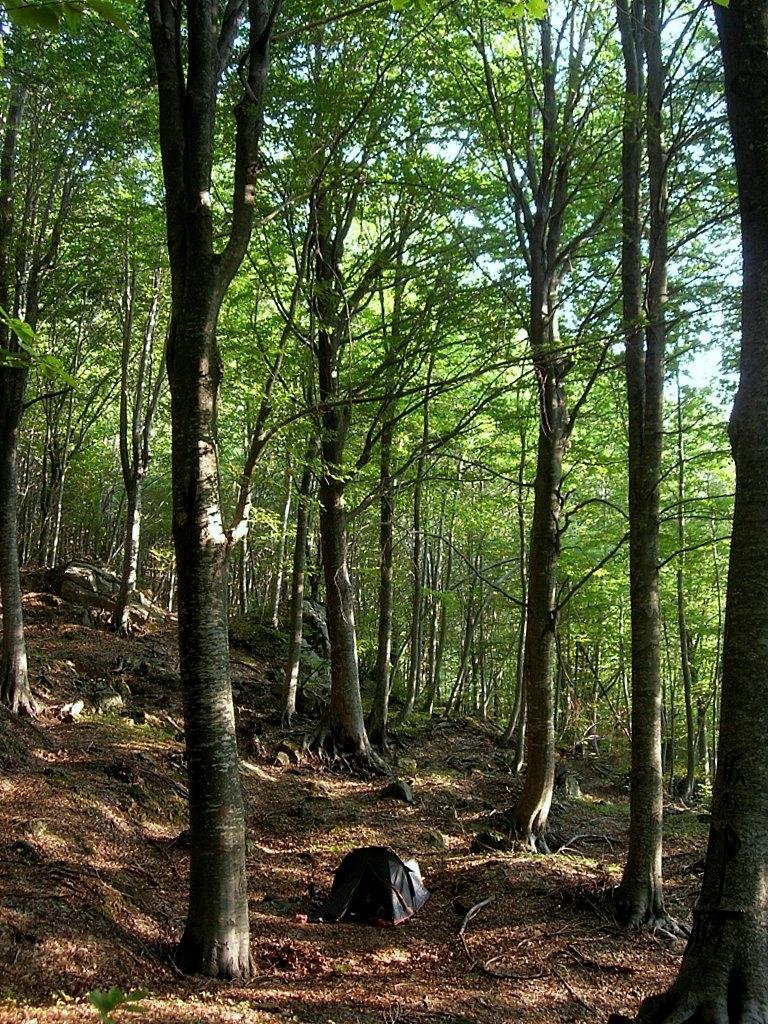 वैज्ञानिक वनसम्बन्धी तालीम