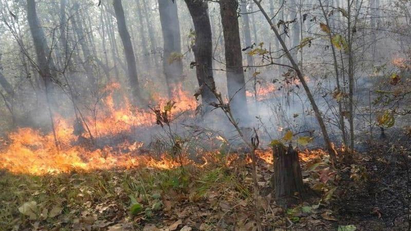 उपभोक्ता सचेत हुँदा वन डढेलोका घटना न्यून