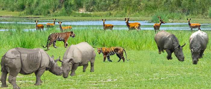 जंगली जनावरको शिकार बढ्दो