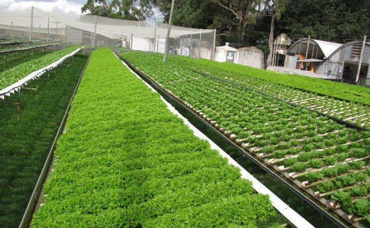 एक वडा एक नमूना कृषि फार्म अभियान