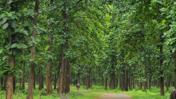हरियो बन नेपालको धनः सात लाख ४० हजार बिरुवा उत्पादन, वृक्षरोपण तीव्र