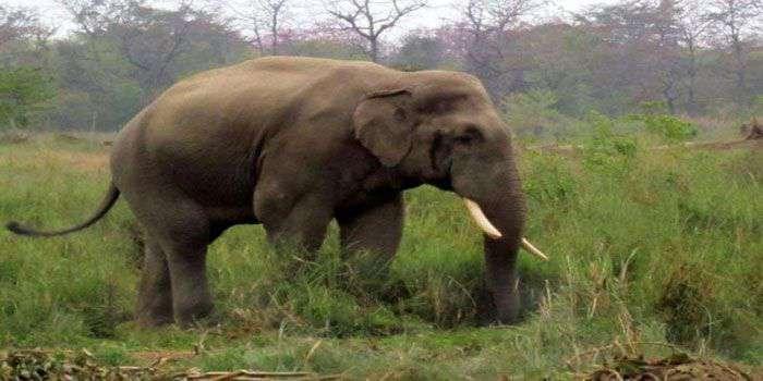 शुक्लाफाँटामा जंगली हात्तीको आतंक, पाकेको धानबाली र स्थानीयको घरमा क्षति