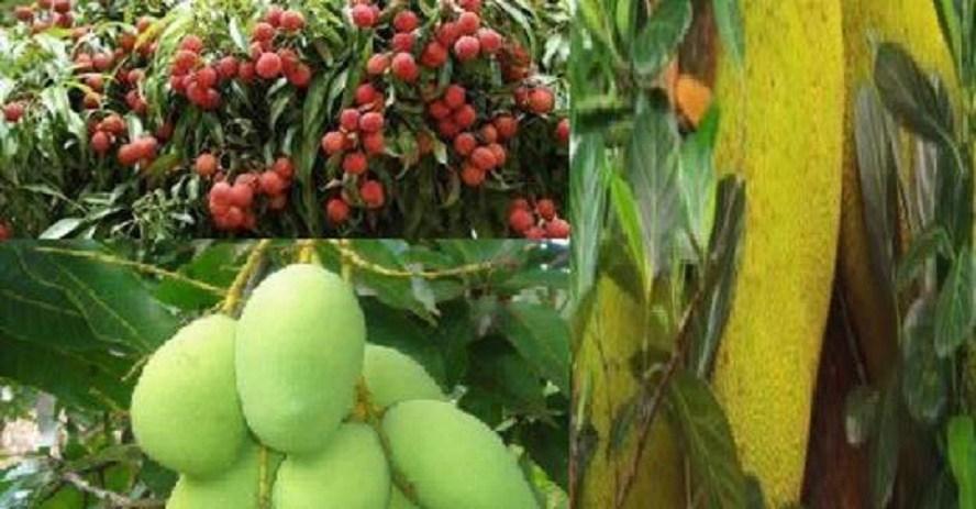 विदेशबाट फर्केर फलफूल खेती