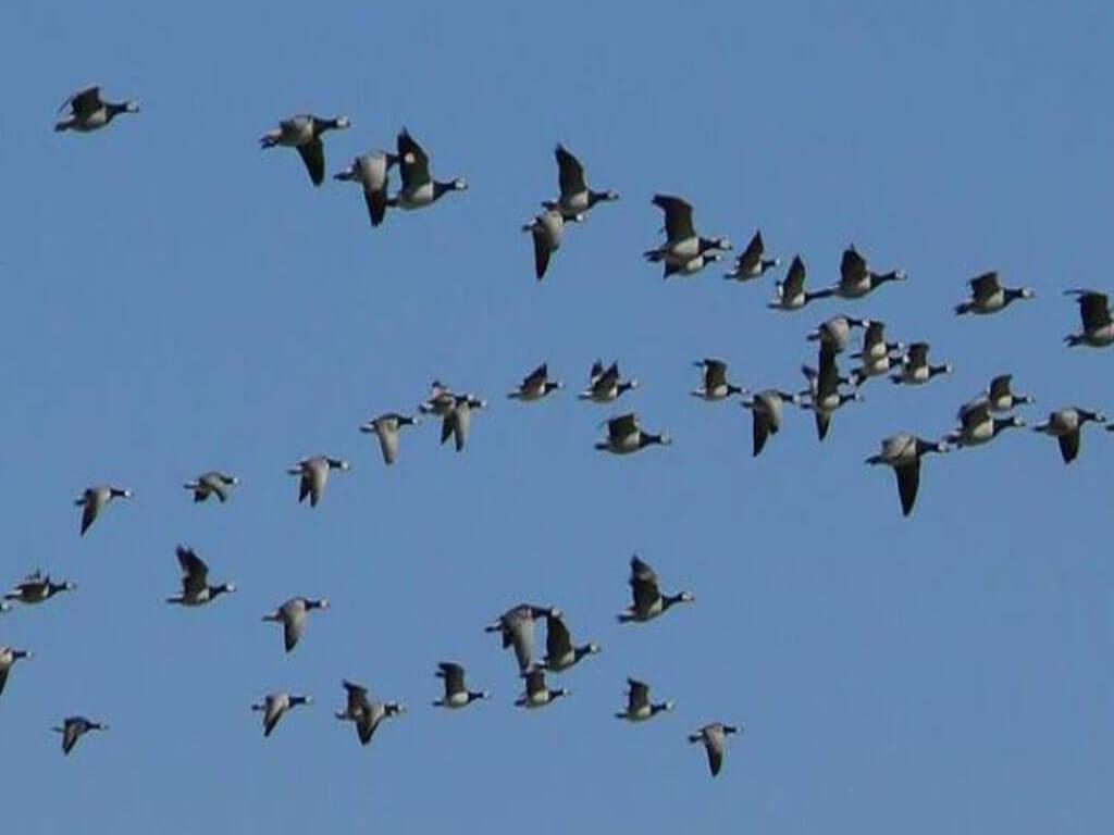 लुम्बिनीमा पक्षी महोत्सव शुरु
