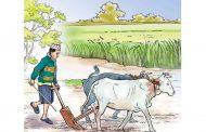 सरकारी जागिरसँगै कृषिबाट मनग्य आम्दानी
