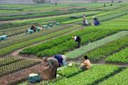 'एक गाउँ, एक प्राविधिक' मा जोड, कृषि क्षेत्रको विकासमा अग्रसर हुने निर्णय