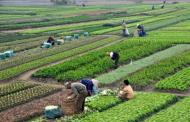 फेरिँदै दिनचर्या चेपाङ समुदायको, तरकारी खेतीमा रमाउँदै