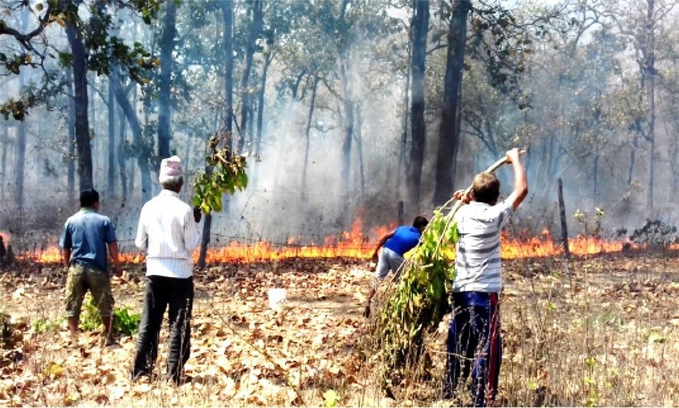 सामुदायिक वन डढेलोको उच्च जोखिममा
