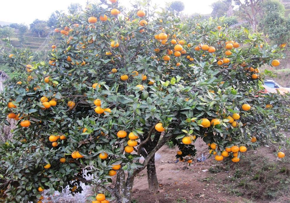जुनार किसानलाई अनुदानमा कृषि औजार