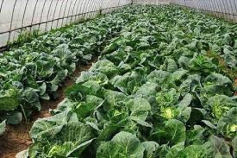 काभ्रेपलाञ्चोकमा कृषि उपजलाई प्राङ्गारिक बनाइने