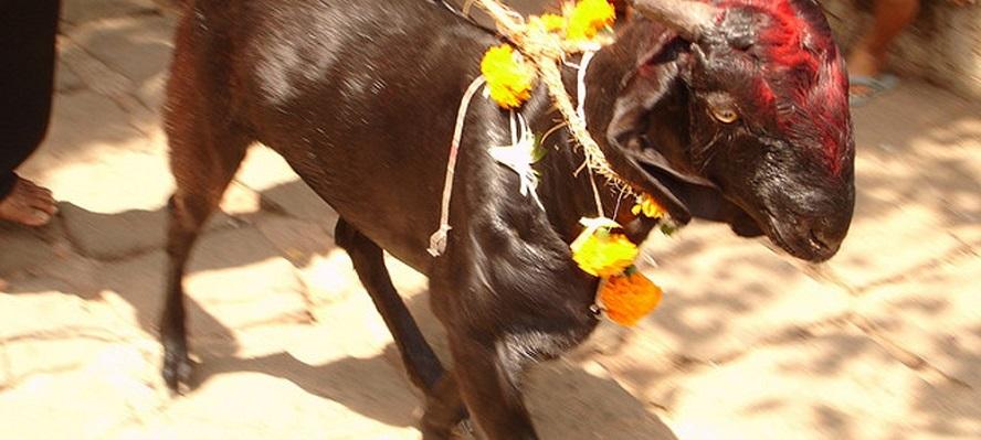 पशुबलि न्यूनीकरण सचेतना बढ्दै