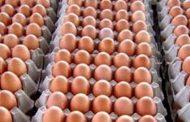 अण्डाको मूल्य बढ्योः कृषक भने हर्षित तर लागत मूल्य अझै पुगेन