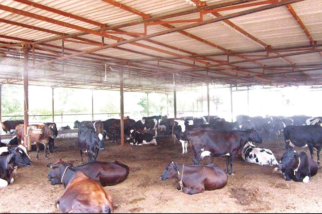 विदेशिएका युवा पशुपालनमा आकर्षितः दूधको मूल्यवृद्धि नहुँदा निरुत्साहित
