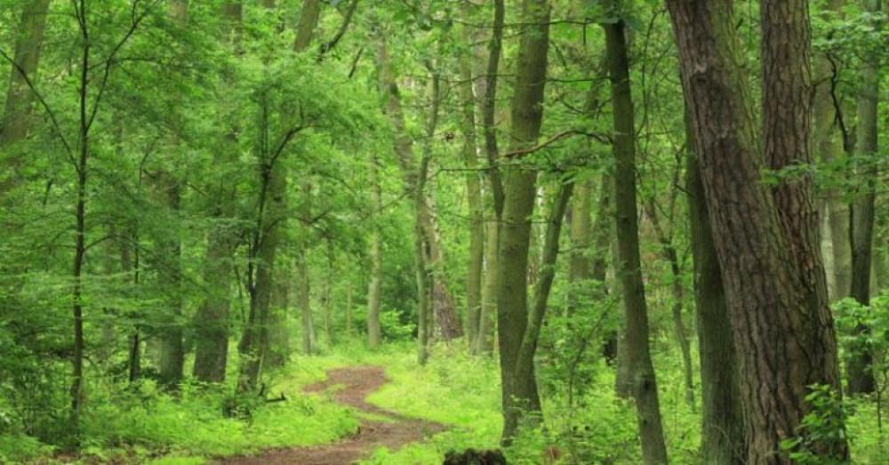 रानीवारी वन 'मर्निङ वाक' को गन्तव्यस्थल