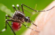 तराई क्षेत्रमा डेङ्गु रोगले महामारी रुप लिँदै