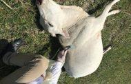 अज्ञात रोगका कारण एकै गोठका आठ पशु चौपाया मृत्यु