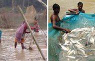 Majhi community at Khaniyabas do not grow 'jamara' for Dashain