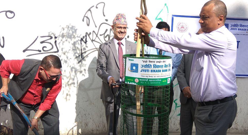 दशैंको मुखमा ज्योति विकास बैंकद्वारा महाराजगंजमा वृक्षारोपण