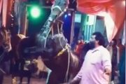 घोडा बन्यो दुलाहा : दुई खुट्टा टेकेर उफ्रीउफ्री गर्यो यस्तो डान्स