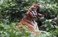 मानव वन्यजन्तु द्वन्द्व न्यूनीकरणका लागि क्षतिपूर्ति कोष