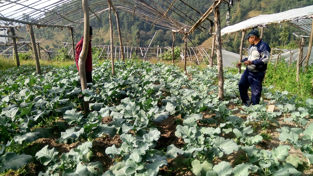 'साना कृषि मोडेल फर्म स्थापना' का लागि ३९ फर्म छनोट