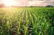 किसानसँग गाउँ सरकार कार्यक्रम' निरन्तर