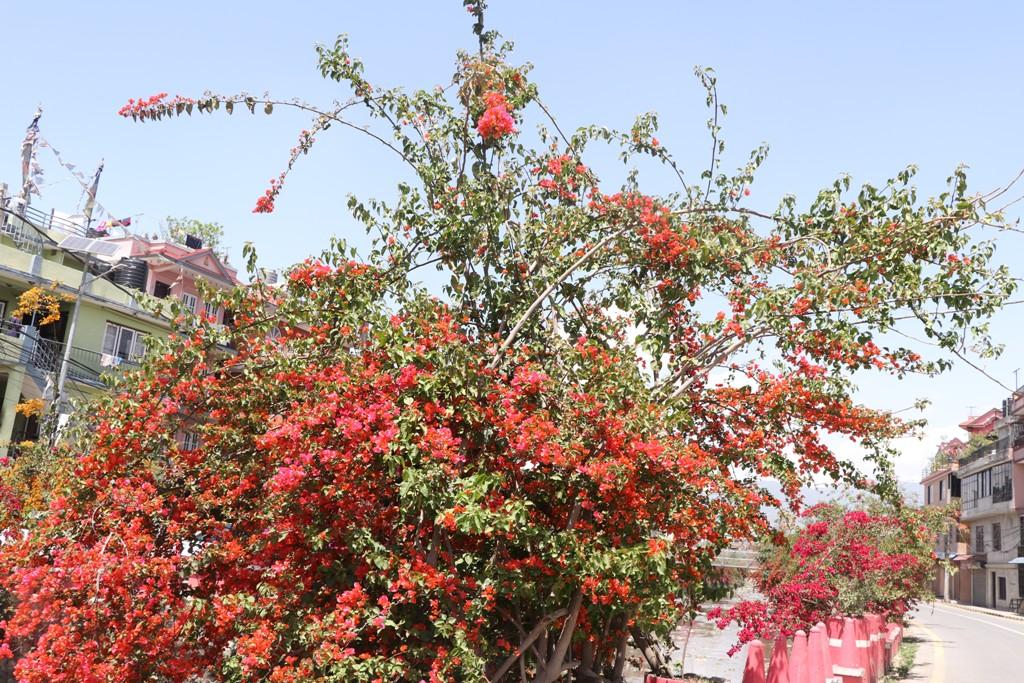 लकडाउनको त्रासलाई बिर्षाउने सुन्दर फुल (२० तस्विर)