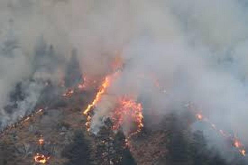 म्याग्दीका ४७ सामुदायिक वनमा आगलागीः बाह्र सय हेक्टर वन क्षेत्रमा क्षति