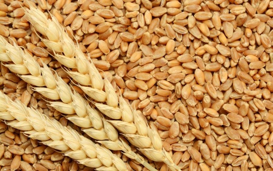 खाद्य कम्पनीद्वारा सरकारी मूल्यमा किसानको गहुँ खरिद